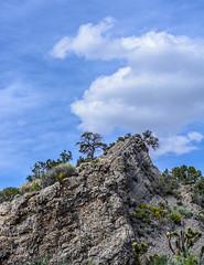 Now I want to climb up there (Francisca Vega Weber) Tags: spring nevada mojavedesert pahrump nyecounty nikond5200 nikkor50mm118g