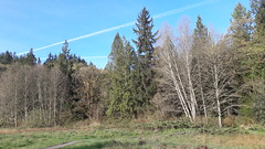 20160331_090216 (ks_bluechip) Tags: creek evans trails preserve sammamish usa2106