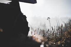 (Jon.the.canadian) Tags: white canada black nature wheel fog contrast canon newfoundland landscape outdoors moody wheels foggy ish