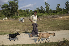 Supporting conflict-affected communities in northern Rakhine (FAO of the UN) Tags: asia unitednations myanmar fao faooftheun maungdawtownship