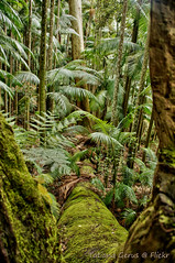 Palm forest of Tamborine (Tatters ) Tags: trees green forest palms moss australia fallen tamborine oloneo oloneophotoengine