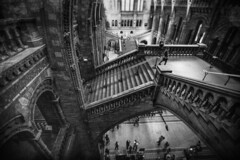 I'm still here (stocks photography.) Tags: bw london photography photographer dreaming thenaturalhistorymuseum imstillhere michaelmarsh theconstantdreamer