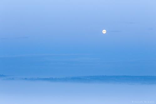 Moonlit Mist