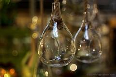 IMG_1169s21FAD (Foto_A_Day) Tags: flower glass vintage lens bokeh pot 55mm exa exakta steinheil f19 bokehlicious quinon