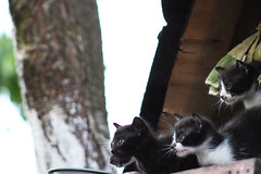 Mew MEw MEw MeW (dzepni_oktavo) Tags: pet cute beautiful animal cat small kittens mew