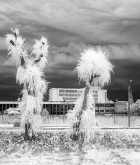 Dancin' Fool(s) (DomiKetu) Tags: street city trees sky blackandwhite bw white storm black monochrome clouds ir mono blackwhite cityscape dancing panasonic romania infrared converted sibiu blackwhitephotos 850nm tz10