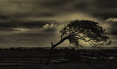 A lonely tree (miroslav.tokarsky) Tags: travel light england bw white black tree art abandoned nature rural landscape countryside scary mood place pentax country feel somerset creepy horror lonely pentaxart