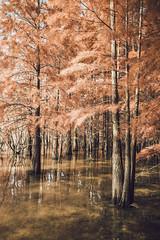 Fantasy Lake 3 (Picocoon) Tags: china light sunset shadow lake forest surrealism surreal fantasy shore lakeshore tranquil metasequoia hefei