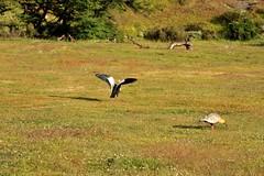 La cigale et la fourmi (un sablier) Tags: patagonia rainbow chili ibis patagonie arcenciel