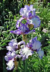 Edwards Gardens, Toronto, ON (Snuffy) Tags: flowers toronto ontario canada edwardsgardens torontobotanicalgarden level1photographyforrecreation