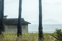 DSC_0068 (Gabriela Evangelista O.) Tags: california mar plantas ensenada baja
