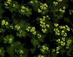 2016-05-22 (Gim) Tags: warszawa warsaw warschau varsovie ogrdbotaniczny botanicalgarden jardinbotanique rdmiecie mazowsze mazovia mazovie polska poland pologne polen gim guillaumebavire