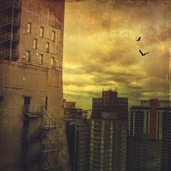 Prdios da Paulista (rvcroffi) Tags: city cidade urban clouds buildings evening cityscape sopaulo hdr prdios entardecer avenidapaulista concreto paulistaavenue mextures