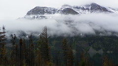 Glacier National Park, Montana (shutter mania) Tags: montana wildlife glaciernationalpark blackbears coyotes kodakmaytrip