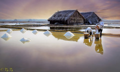 gather salt (vy.vy) Tags: reflection water work landscape daylight natural outdoor working salt harvest naturallight