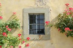 DSC_3848 (erinakirsch) Tags: italy castle landscape florence vineyard view wine vine winery vineyards views tuscany toscana grape grapevine florenceitaly frescobaldi winegrapes nipozzano