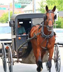 IMG_3752 (joyannmadd) Tags: amish horses intercourse pennsylvania kitchenkettlevillage farm animals lancaster coumty pa farms nature outdoors