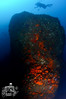 El Cortijo - Peter Ives' Pinnacle (ShaunMYeo) Tags: scubadiving reef gibraltar calpe underwaterphotography جبل gibilterra ikelite طارق גיברלטר elcortijo 直布罗陀 гибралтар γιβραλτάρ gibraltár الطارق cebelitarık gjibraltar ĝibraltaro hibraltar xibraltar giobráltar gibraltārs gibraltaras ġibiltà जिब्राल्टर ஜிப்ரால்டர் జిబ్రాల్టర్ ยิบรอลตา جبرالٹر גיבראַלטאַר गिब्राल्टर জিব্রাল্টার 直布羅 陀જીબ્રાલ્ટર ジブラル peterivespinnacle