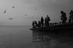 R0020132.jpg (M.J.S.) Tags: seagulls fishing jetty ricoh whitstable