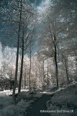 Bienne_DSC7895 (achrntatrps) Tags: trees light luz forest ir licht nikon arboles photographer suisse lumire arbres bern wald berne fort biel photographe baume bienne forst hoyar72 lachauxdefonds 720nm infrarouges d5300 dellolivo alexandredellolivo