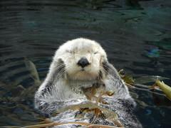 DSCN0349 (pablo.modo) Tags: portugal lisboa animales acuario nutria