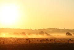 (Tom Roadcap) Tags: trees orange sun sunlight mist hot beautiful field sunshine yellow misty fog sunrise fence cows farm hills pasture rays beams