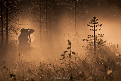 A Photographer's morning (Kysti Vlitalo) Tags: kes elokuu lappi posio riisitunturi summer fog misty morning light forest beaty beautiful tree trees lapland finland nature landscape