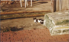Sunbathing. (larissanunesdealbuquerque) Tags: street winter sunset sun sunlight film sunshine animal riodejaneiro analog cat vintage coast lomography kodak streetphotography zenit analogue analogphotography sunbathing kodakfilm filmphotography zenit12xp analogphotograph filmphotograph