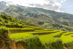 Terraced rice paddies (Pet licule) Tags: field rice paddy vietnam cai ta lao sapa phin laocai terasse paddies terraced taphin phien