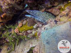 Scuba Diving-Miami, FL-Jun 2016-10 (Squalo Divers) Tags: usa divers florida miami scuba diving padi ssi squalo divessi