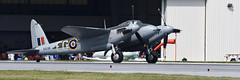 De Havilland DH-98 Mosquito (albionphoto) Tags: usa reading kate pa b17 worldwarii mosquito corsair mustang fifi dday flyingfortress b29 superfortress maam dehavilland p51d