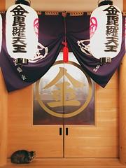 () Tags: door wood travel pet japan cat outdoors focus day snapshot illuminated   osaka information  foreground iphone