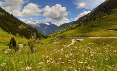 Freshness... (Alex Switzerland) Tags: summer alps flower green nature fleurs canon landscape eos switzerland blumen natura berge alpen fiori landschaft alpi montagna paesaggio 6d grigioni