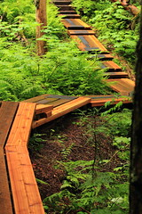 Ancient Forest Boardwalk (Steve Boer) Tags: trees fern forest ancient bc path britishcolumbia trail cedar boardwalk ferns ancientforest