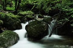 deep in the forest (yves_matiegka) Tags: wood longexposure green water forest dark switzerland waterfall moss rocks kaltbrunnental