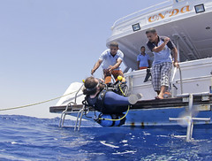 2711 Andrew Searle (KnyazevDA) Tags: sea underwater wheelchair scuba diving disabled diver padi undersea handicapped amputee disability