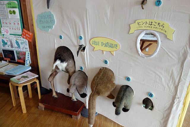 後ろの部分だけを見て動物を当てるクイズです。|山梨県立八ヶ岳自然ふれあいセンター
