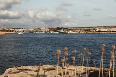 Lampedusa (Daniele Pezzoni Photography) Tags: summer italy lighthouse holiday beach water port faro island see boat rocks barca italia mare estate barche porto acqua spiaggia vacanze isola lampedusa scogli scogliera