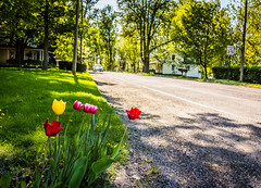 at the corner (aimeeern) Tags: corner canon spring tulips michigan 24mm countryroad odc hinchman ourdailychallenge