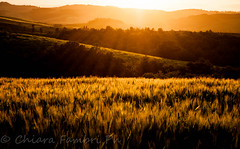 Tramonto in Toscana. Sunset in Tuscany. (Chiar@Love [ON-OFF]) Tags: sunset tramonto hills tuscany toscana valdorcia colline