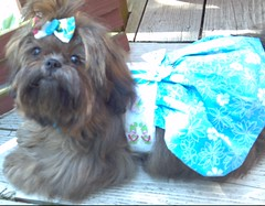 Chloe in her flip flop halter dress (DianaDesignsNY and the Gs) Tags: customer halter dogclothes dogdress