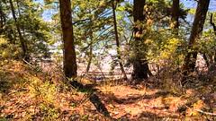 Hiking back (rislyn) Tags: orcasisland obstructionpass