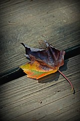 Leaf (Created by M) Tags: autumn fall one leaf colorful fallcolor solo lone centralnewyork summersend