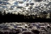 Clouds On A Roof (jah32) Tags: autumn trees roof light sky sun reflection fall car silhouette clouds dark nikon ominous d7100