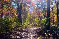 DSC_1454 (Six Sigma Man (Thank you for the 1.6M+ views)) Tags: autumn fallcolors longisland smithtown blydenburghcountypark