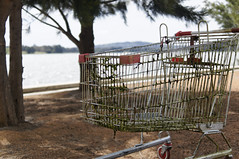 shopping trolley from the black lagoon (Seakayem) Tags: 35mm sony shoppingtrolley canberra f18 slt belconnen lakeginninderra a55