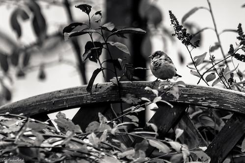 Der frühe Vogel 321/365