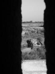 A travers la meurtrire (desmoniac) Tags: tour fortification chateau marais camargue meurtrire carbonnire desmoniac