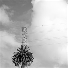 alone on the wire (loop_oh) Tags: espaa cloud bird clouds island volcano lava wire spain meer alone kanaren wolke wolken canarias palm atlantic insel espana tenerife santacruzdetenerife canary volcanoes teide teneriffa isle espagne atlanticocean canaryislands isla palme islas spanien vogel islascanarias atlantik vulkan canaryisland ocanoatlntico ozean vulkane picodelteide tacoronte