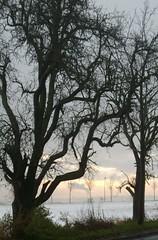 Jesu, du Kron der Jungfräulein (amras_de) Tags: winter camp field vinter hiver feld pole campo invierno inverno talvi zima champ acker vetur åker talv hivern põld kis ager wanter hiems iarna keto negu tél ziema kampo žiema zelai njiva laukas tún vintro páirc hibierno câmp geimhreadh ivèrn mmernu